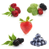 Wild fruits composition Stock Photo