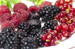 Wild fruits: raspberries, blueberries and blackberries Royalty Free Stock Photo