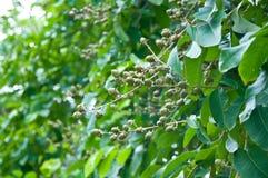 Wild fruits stock photos