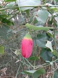 wild frukt Royaltyfri Fotografi