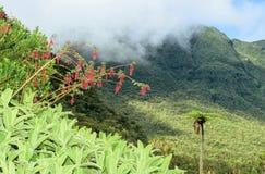 wild fuchsia Royaltyfria Bilder