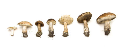 Wild Fungi Line Up Stock Image