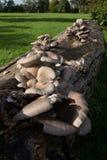 Wild fungus Stock Images