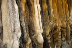 Wild Fur Royalty Free Stock Photos