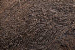 wild galtscrofasus seamless tileable hudtextur Royaltyfri Foto