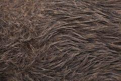wild galtscrofasus seamless tileable hudtextur Arkivfoto