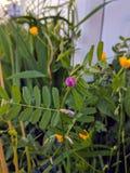 Wild Garden at dusk stock photos