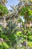 Wild garden Misfah Abreyeen Stock Images