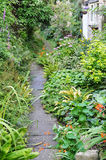 Wild Garden Pathway Stock Photo