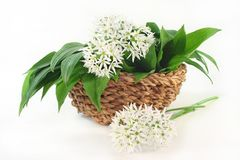 Wild garlic Royalty Free Stock Images