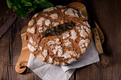 Wild garlic bread. A tasty wild garlic bread Stock Photography