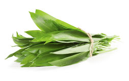 Wild garlic. A bunch of wild garlic leaves on a white background Stock Photos