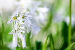 Beutiful white wild flowers background stock photography