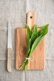 Wild garlic Royalty Free Stock Images