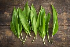 Wild garlic Stock Image