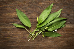 Wild garlic. Leafs on wooden background overhead shoot royalty free stock photos