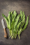 Wild garlic leaves with knife on grey stone background, healthy lifestyle, seasonal spring herb for kitchen, allium.  Royalty Free Stock Image