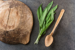 Wild garlic leaves with wooden bowl and spoon on grey stone background, healthy lifestyle, seasonal spring herb for kitchen, alliu. M Stock Images