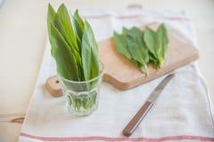 Wild garlic, ramson Stock Image