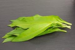 Wild garlic. On slate plate royalty free stock photo