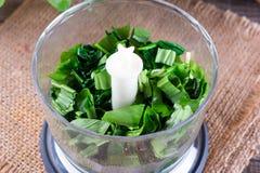 Wild garlic stripes for fresh wild garlic pesto royalty free stock image