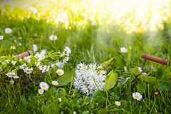 Wild garlic, sweet woodruff and other herbs Royalty Free Stock Photos