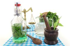 Wild garlic tincture with mortar Stock Image