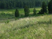 Wild gebied. Royalty-vrije Stock Afbeelding