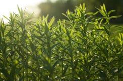Wild gebied van gras op zonsondergang, zachte zonstralen, het warme stemmen Royalty-vrije Stock Afbeelding
