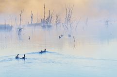 Wild geese. In the Herbis Weiher- South Germany Stock Images