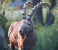 wild getrock Fotografering för Bildbyråer