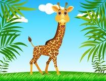 wild giraff Royaltyfria Foton