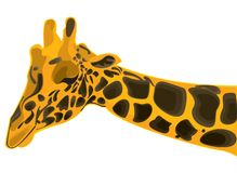 Wild giraffe Royalty Free Stock Photography