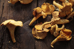 Wild girolle mushrooms Stock Photos