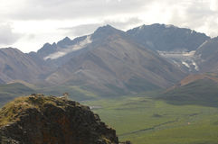 Wild goats in Alaska. On top of mountain Royalty Free Stock Photo