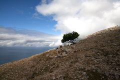 Wild goats on a mountain with a tree royalty free stock image