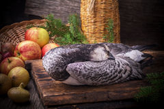 Wild goose duck hunted in the hunting season on Stock Images
