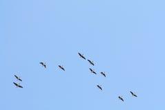 Wild-gooses-wildernis Royalty-vrije Stock Foto