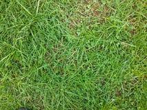 wild gräs arkivfoto