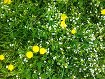 wild gräs royaltyfria bilder