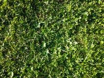 wild gräs royaltyfri bild