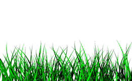 wild gräs 3d Arkivbild