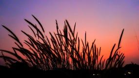 wild gräs Arkivbilder