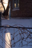 Wild grape`s branches on metallic fence in winter season. Royalty Free Stock Images