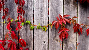 Red and green leaves background Stock Images