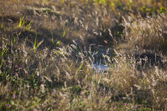 Wild Gras Stock Fotografie