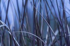 Wild gras abtract in blauwe schaduwen Stock Afbeelding