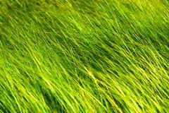 Wild gras in bos Royalty-vrije Stock Fotografie
