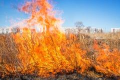 Wild gras op brand Stock Foto's