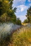 Wild grasgebied Weg in het hoge gras stock afbeeldingen